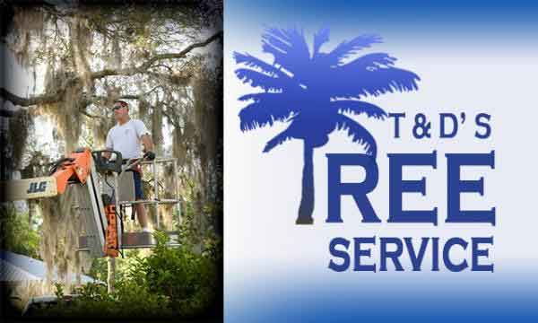 TD Tree Service Palm Coast