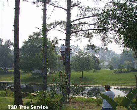Military SPECIAL 10% off tree trimming Palm Coast