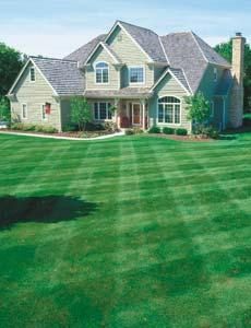 50% Off First Lawn Care Treatment Palm Coast Offer